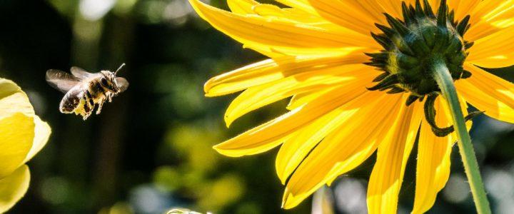 Chciwość – być jak pszczoła